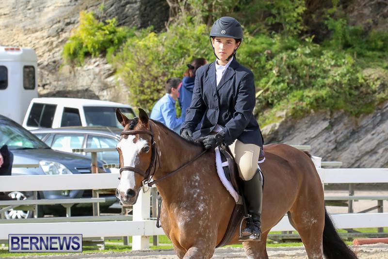 RES-Horse-Show-Bermuda-January-21-2017-50