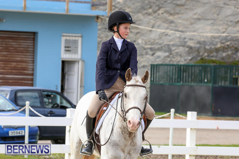 RES-Horse-Show-Bermuda-January-21-2017-53