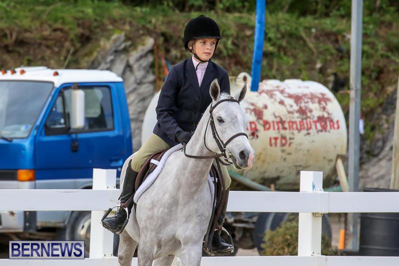 RES-Horse-Show-Bermuda-January-21-2017-8