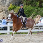 RES Horse Show Bermuda, January 21 2017-83