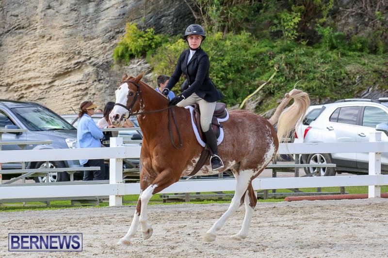 RES-Horse-Show-Bermuda-January-21-2017-83