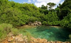 Walsingham Nature Reserve Bermuda February 2017