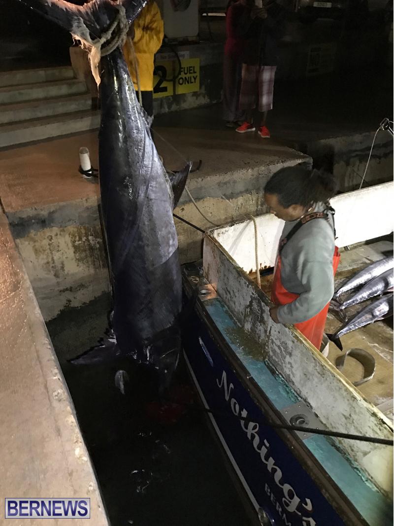 large fish bermuda 2017 (2)