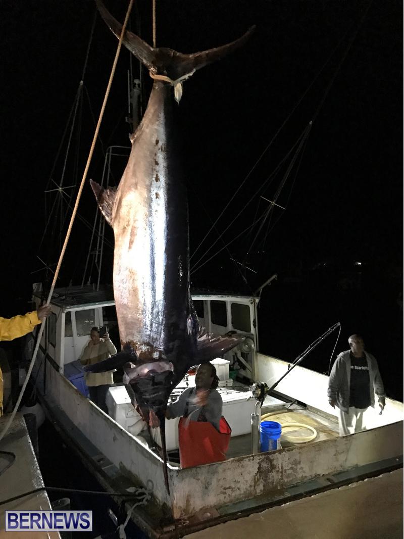 large fish bermuda 2017 (3)