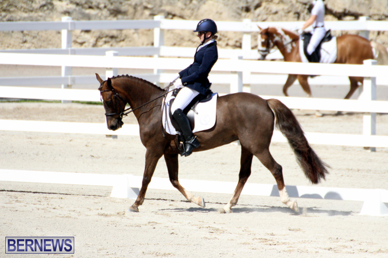 CEA-Dressage-Competition-Bermuda-Feb-26-2017-1