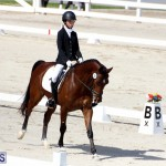 CEA Dressage Competition Bermuda Feb 26 2017 (10)