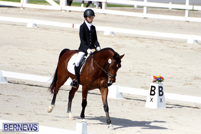 CEA-Dressage-Competition-Bermuda-Feb-26-2017-10