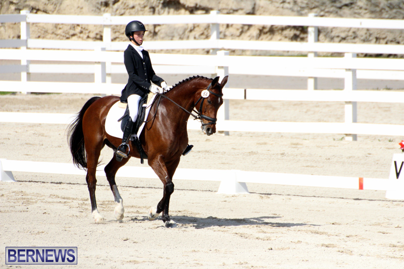CEA-Dressage-Competition-Bermuda-Feb-26-2017-12