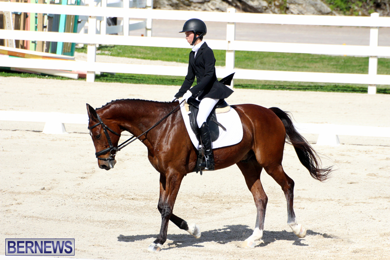 CEA-Dressage-Competition-Bermuda-Feb-26-2017-13