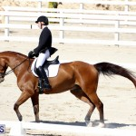 CEA Dressage Competition Bermuda Feb 26 2017 (19)