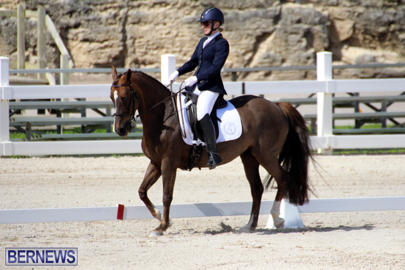 CEA-Dressage-Competition-Bermuda-Feb-26-2017-2