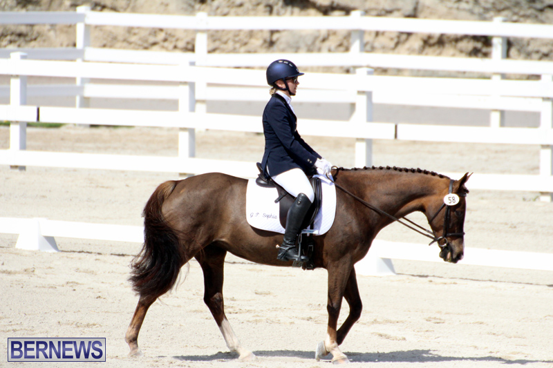 CEA-Dressage-Competition-Bermuda-Feb-26-2017-3