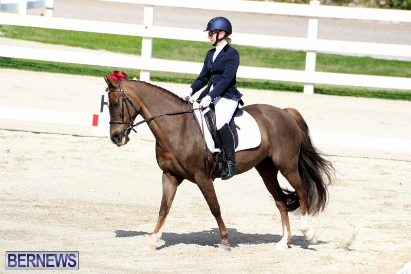 CEA-Dressage-Competition-Bermuda-Feb-26-2017-4