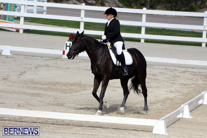 CEA-Dressage-Competition-Bermuda-Feb-26-2017-7