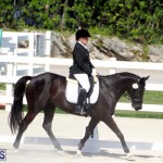 CEA Dressage Competition Bermuda Feb 26 2017 (9)