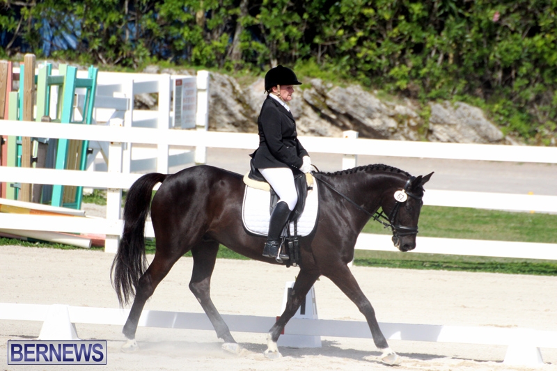 CEA-Dressage-Competition-Bermuda-Feb-26-2017-9