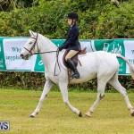 RES Spring Horse Show Series Bermuda, March 11 2017-33