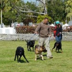 SPCA Paws To The Park Bermuda March 5 2017 (1)