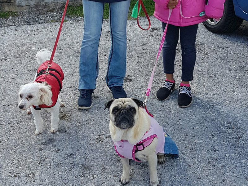 SPCA-Paws-To-The-Park-Bermuda-March-5-2017-11-1