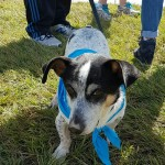 SPCA Paws To The Park Bermuda March 5 2017 (15)