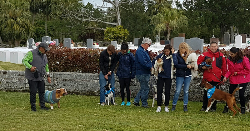SPCA-Paws-To-The-Park-Bermuda-March-5-2017-20