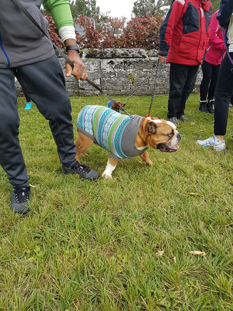 SPCA-Paws-To-The-Park-Bermuda-March-5-2017-5