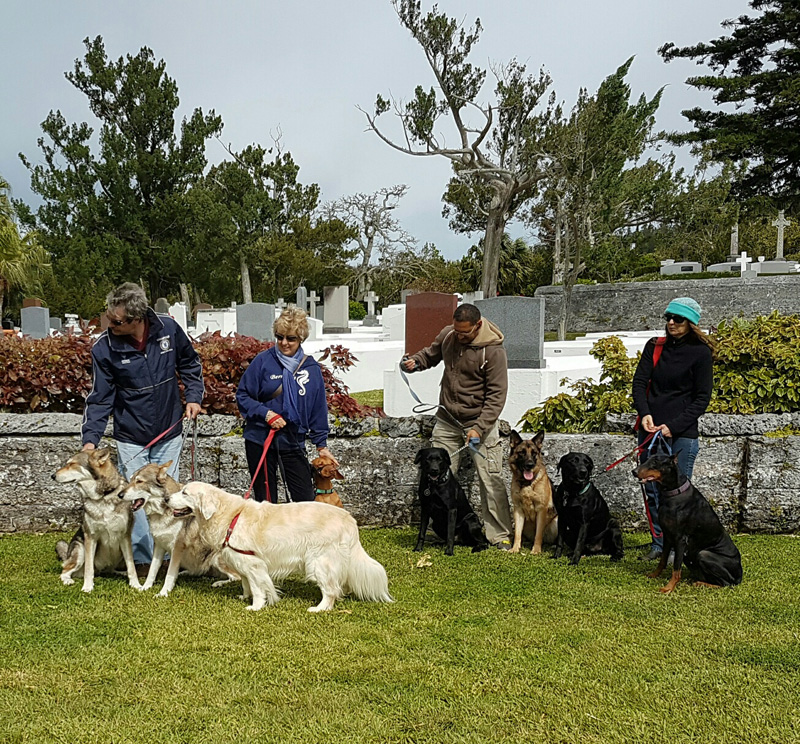 SPCA-Paws-To-The-Park-Bermuda-March-5-2017-7