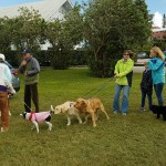 SPCA Paws To The Park Bermuda March 5 2017 (8)
