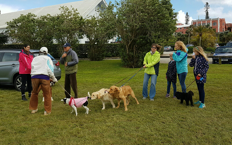 SPCA-Paws-To-The-Park-Bermuda-March-5-2017-8