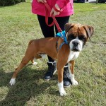 SPCA Paws To The Park Bermuda March 5 2017 (9)