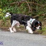 WindReach Walk And Roll Bermuda, March 11 2017-58