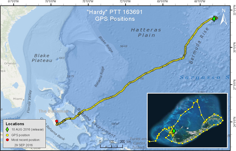 """Hardy's"" Transmitter Bermuda April 13 2017 (2)"