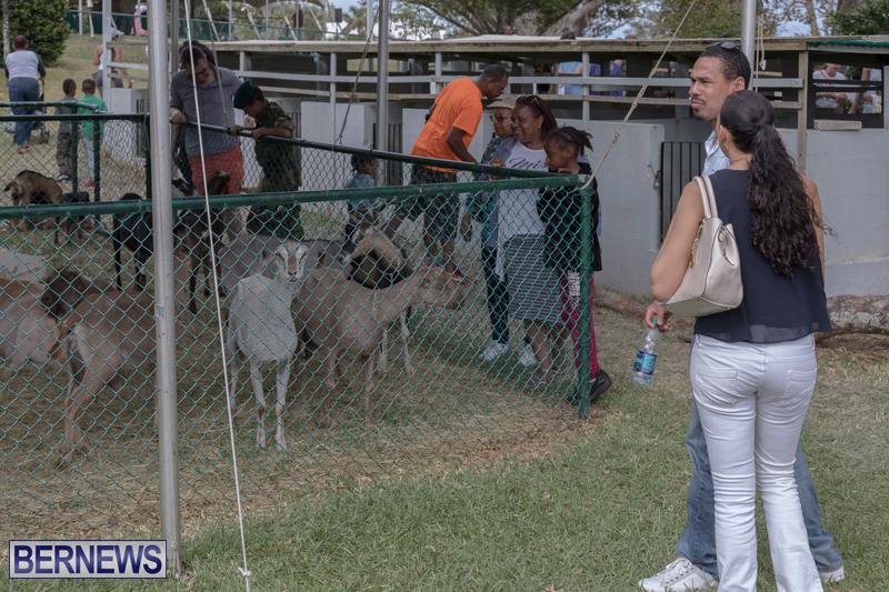 AgShow-Day-3-Bermuda-April-22-2017-47