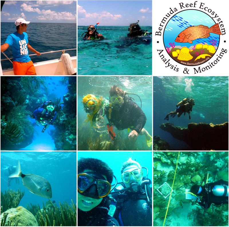 BREAM Team Divers Bermuda April 2017