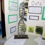 Bermuda Institute Science Fair, April 5 2017-15