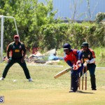 Cricket Bermuda June 7 2017 (2)