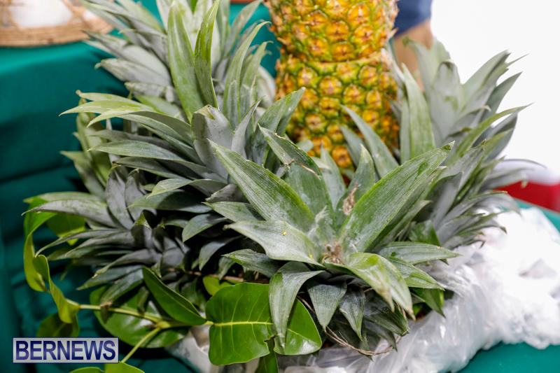City-Food-Festival-Chef-Competition-Bermuda-September-18-2017_3503