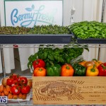 City Food Festival Chef Competition Bermuda, September 18 2017_3518