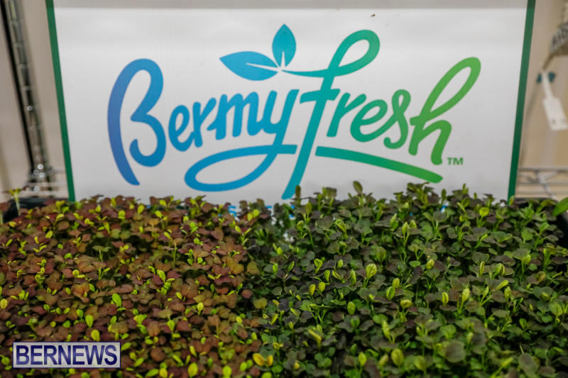 City-Food-Festival-Chef-Competition-Bermuda-September-18-2017_3522