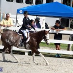 BHPA Fall Show 2017 Bermuda Oct 25 2017 (13)