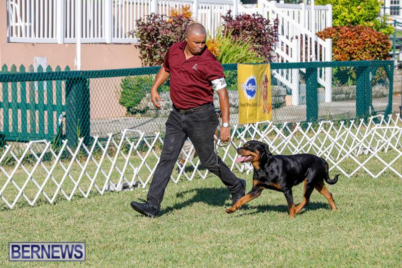 International-Dog-Show-Bermuda-October-21-2017_8085