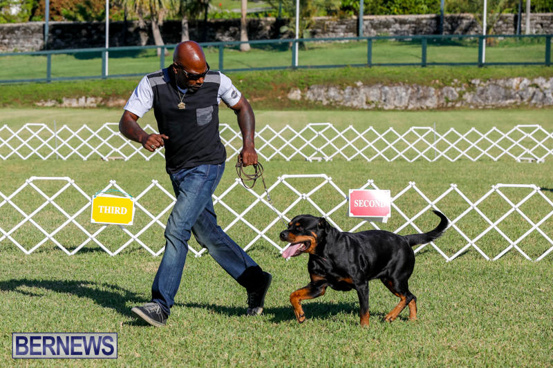 International-Dog-Show-Bermuda-October-21-2017_8125