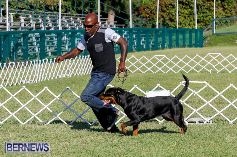 International-Dog-Show-Bermuda-October-21-2017_8134