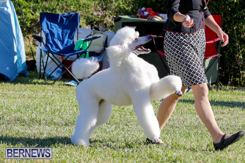 International-Dog-Show-Bermuda-October-21-2017_8171