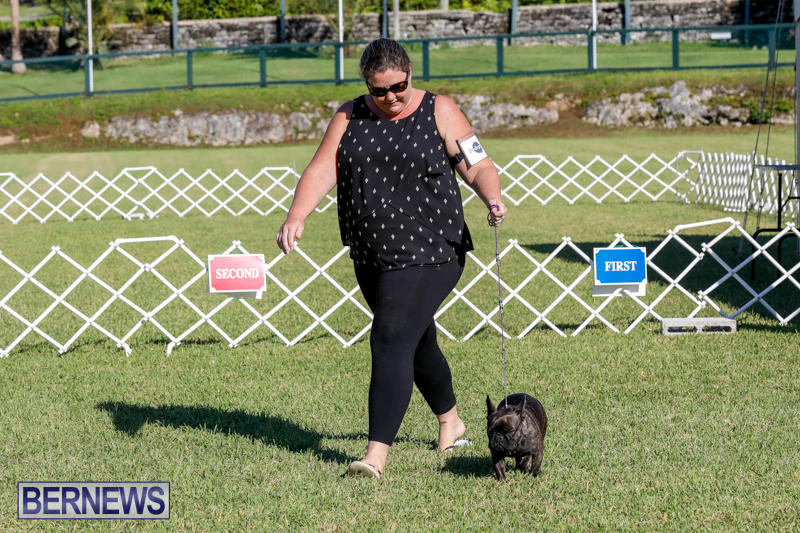International-Dog-Show-Bermuda-October-21-2017_8183