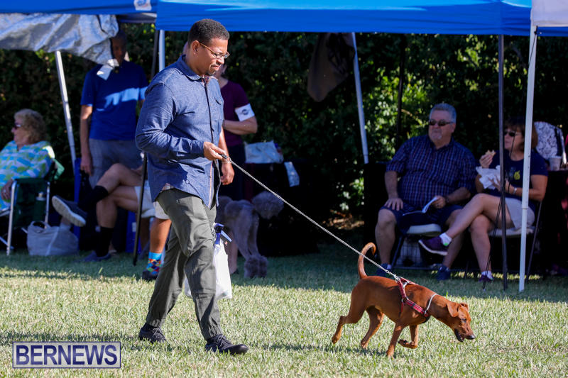International-Dog-Show-Bermuda-October-21-2017_8193