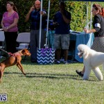 International Dog Show Bermuda, October 21 2017_8195