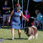 International Dog Show Bermuda, October 21 2017_8202
