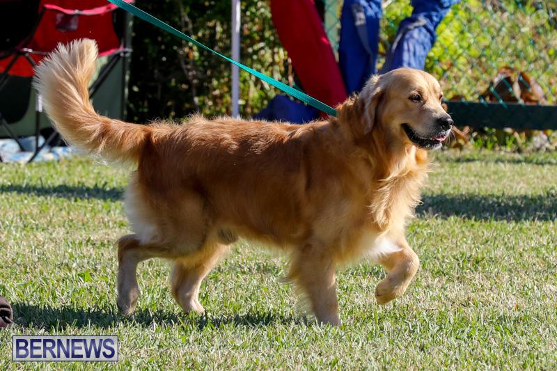 International-Dog-Show-Bermuda-October-21-2017_8214