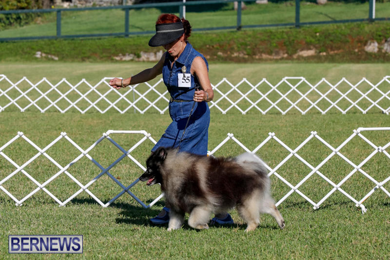 International-Dog-Show-Bermuda-October-21-2017_8218